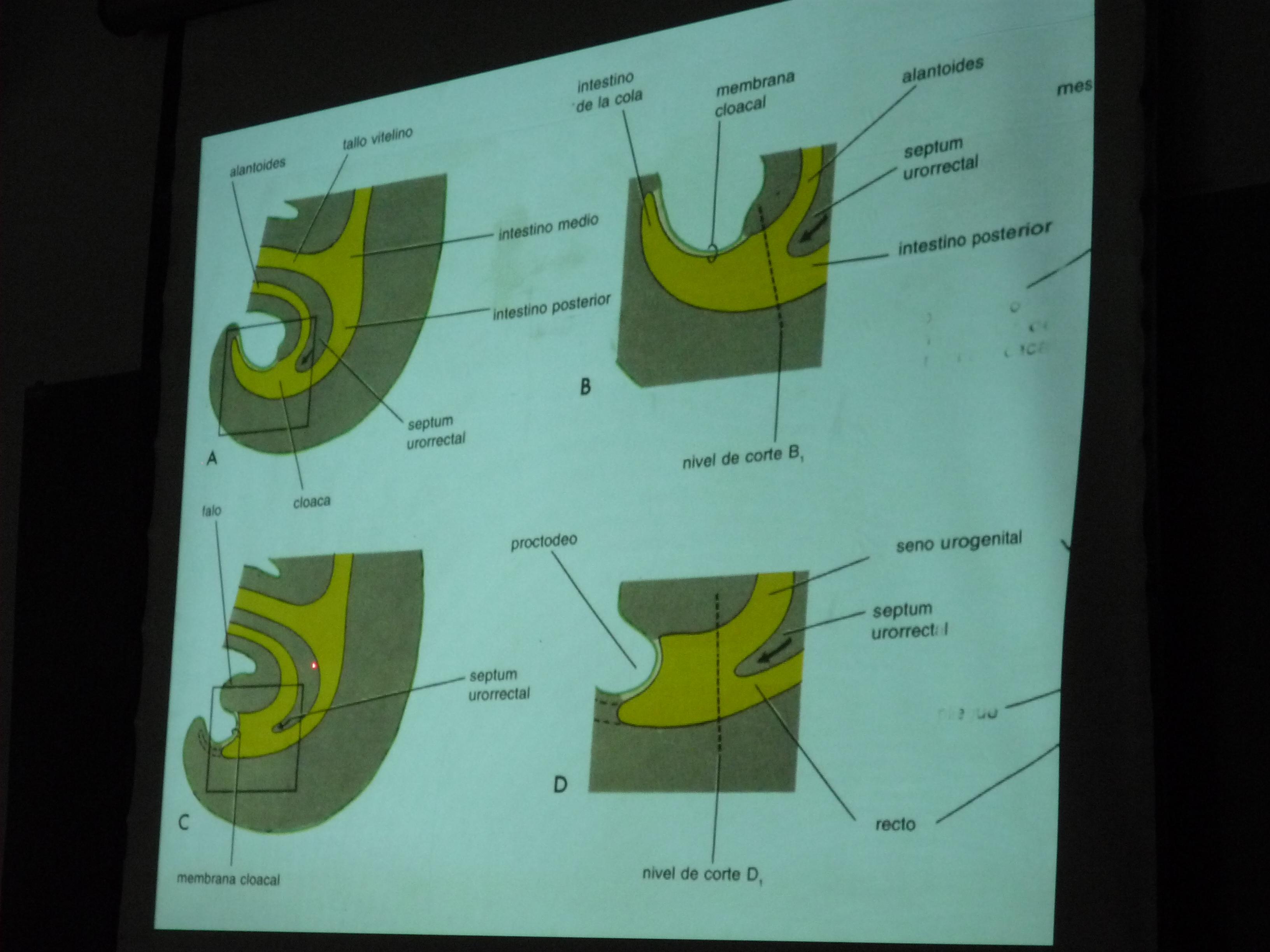 Pré-visualização de imagem de arquivo