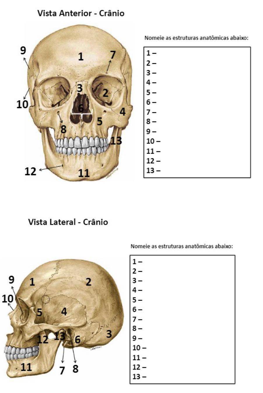 Exercicio Anatomia Ossos Anatomia I