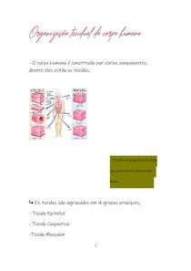 organização tecidual do corpo humano
