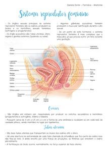Anatomia - Sistema Reprodutor Feminino