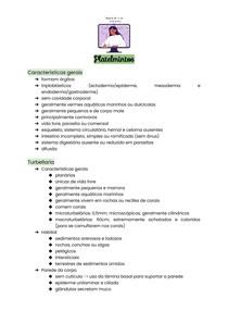 Acelomados - Platelmintos e Nemertea