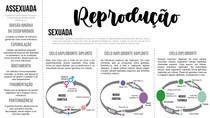 Tipos de reprodução