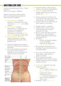 Anatomia dos rins