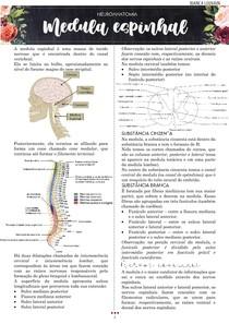 Medula espinhal - neuroanatomia