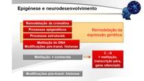 Neurobiologia #9 - Epigénese e Neurodesenvolvimento