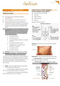 Anatomia P1P2