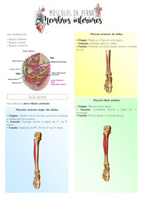 Músculos da perna