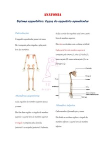 sistema esquelético: esqueleto apendicular