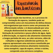 Esporulação das bactérias - Resumo