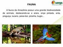 Apresentação Amazônia