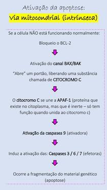 Ativação da apoptose - via mitocondrial