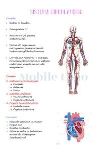Anatomia Humana: Sistema Circulatório