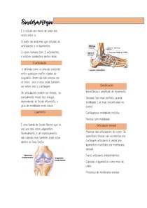 Sindesmologia