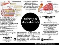 Mapa mental sobre Musculo esquelético