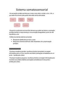 Sistema somatossensorial