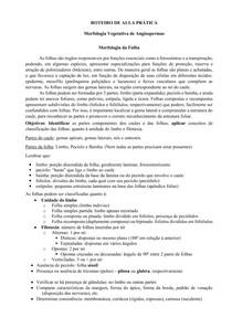 Roteiro aula prática - Morfologia da Folha