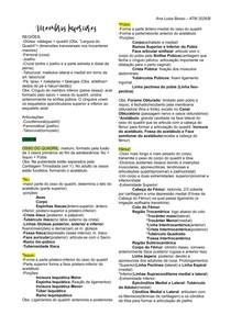 Membro Inferior (Ossos, Vascularização e Inervação)