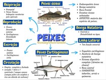 Peixes (mapa mental)