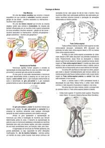 Fisiologia da medula