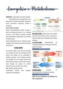ENERGÉTICA E METABOLISMO (resumo)