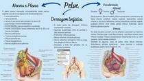 Pelve Vascularição Drenagem Linfática Nervos e Plexos da Pelve (2)