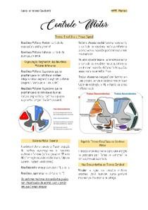 Controle Motor- Trondo Encefálico e Medula Espinal