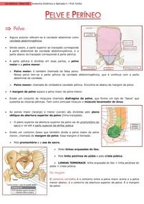 Pelve e Períneo + Vascularização
