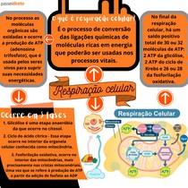Respiração celular - MAPA MENTAL