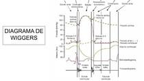 ciclo cardíaco - diagrama