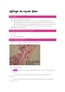 Histologia da vesícula Biliar