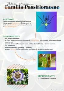 Família Passifloraceae   Botânica - Angiospermas
