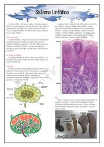 Histologia - Sistema Linfático (06.11.20)