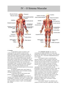 Anatomia Apostila Sobre Sistema Muscular Sistema