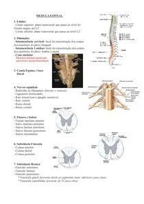 Sistema Nervoso Central - Nomenclatura