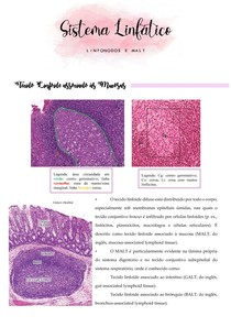 Linfonodos e MALT - Resumo
