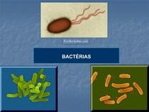 algumas classificaçoes bacterianas