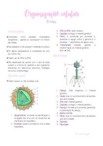Organização Celular - Vírus
