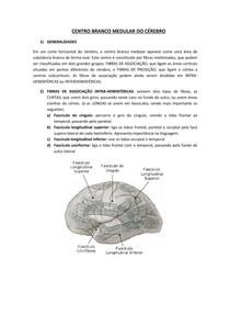CENTRO BRANCO MEDULAR DO CÉREBRO - NEUROLOGIA/NEUROANATOMIA