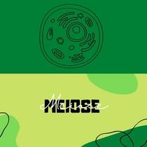 Meiose (1)