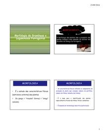 aula morfologia vegetal estrutura das gramíneas