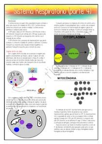 Fisiologia - Sistema Respiratório (parte 4) (14.09.20)