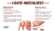 fibras musculares- part.1