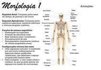 morfologia: introdução, tecidos epitelial e conjuntivo
