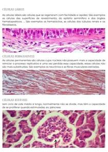 Ciclo de vida das células