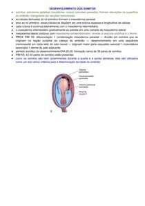 Desenvolvimento dos Somitos - Semana 3 do Desenvolvimento Embrionário