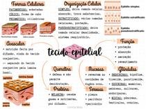 Tecido Epitelial - MAPA MENTAL BÁSICO