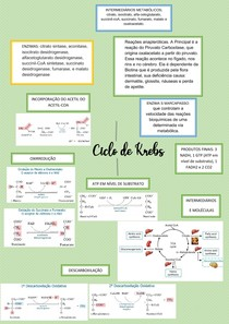 CICLO DE KREBS - MAPA CONCEITUAL