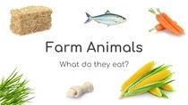 What do they eat? (Farm Animals)