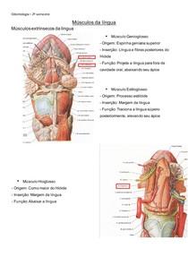 Músculos da língua