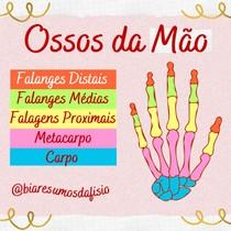 Ossos da Mão - Parte 1 - @biaresumosdafisio